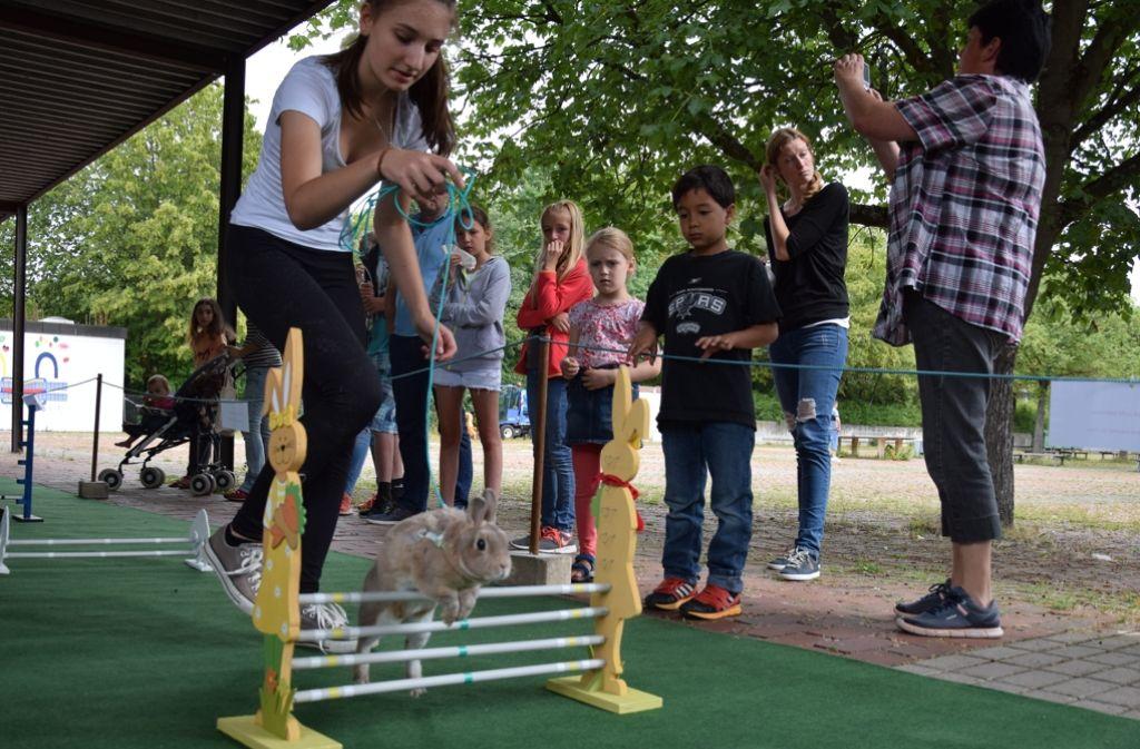 Häschen hüpf! Beim  Kaninhop müssen Langohren einen Parcours bewältigen. Foto: Alexandra Kratz