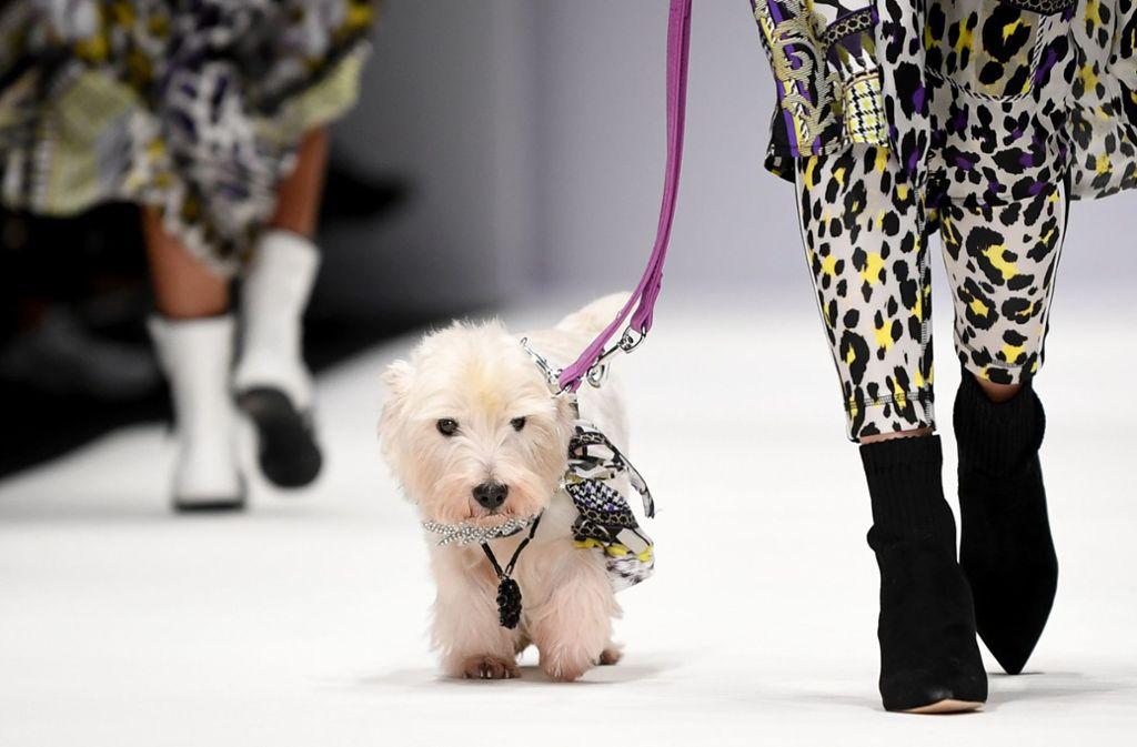 Die Designer lassen sich manches einfallen, um Aufmerksamkeit zu bekommen. Bei der letzten Fashion Week in Berlin im Januar  tauchte überraschend ein weißes Hündchen auf dem Catwalk auf. Mal sehen, was sie sich dieses Mal wieder ausgedacht haben. Foto: dpa