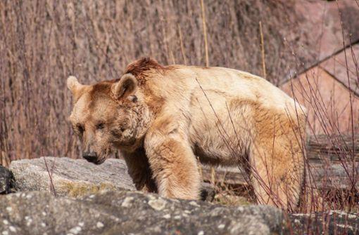 Braunbär Raschid mit 34 Jahren gestorben