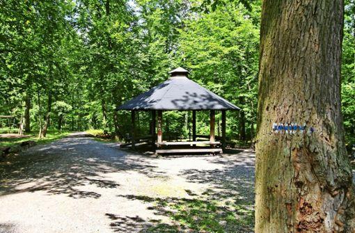Forstamt fällt Bäume im Pfaffenwald