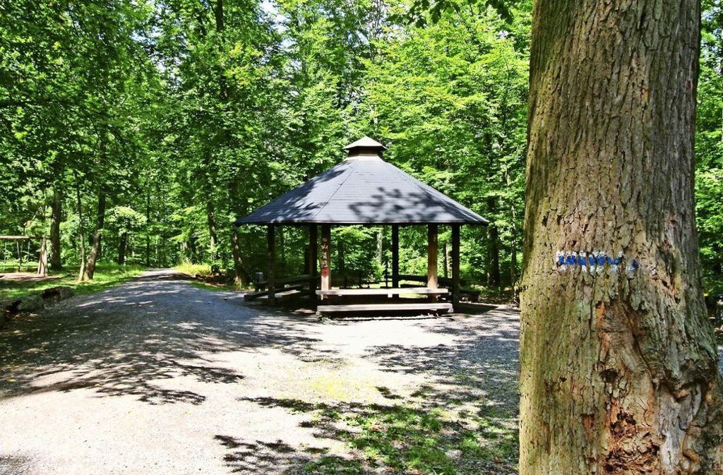 """Der Pfaffenwald, im Bild der Grillplatz """"Unter vier Eichen"""", wird durchforstet: Auf 50 Hektar fällt das Forstamt in den kommenden Wochen Bäume. Foto: Archiv Stefanie Käfferlein"""