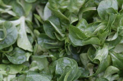 Feldsalat – fünf Fakten über den Salat Nummer eins