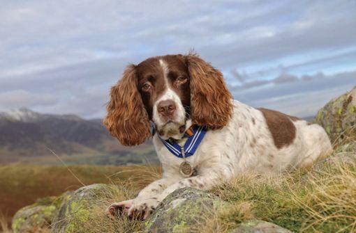 Therapiehund in England bekommt hohe Tierauszeichnung