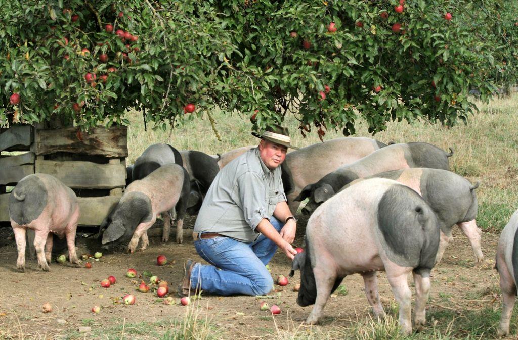 Die Bäuerlichen Erzeugergenossenschaft Schwäbisch Hall  will  eine Alternative zu großen Agrarfabriken sein. Im Bild Rudolf Bühler, Gründer und Vorsitzender, und seine Hällischen Landschweine. Foto: BESH