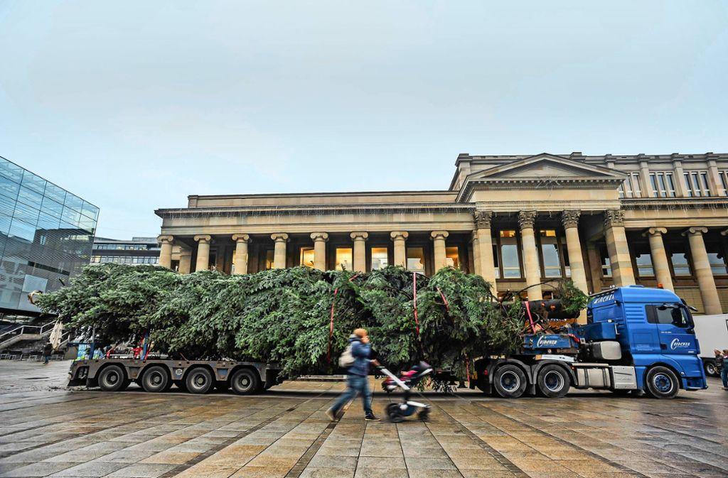 Der Weihnachtsbaum aus dem Welzheimer Wald ist angekommen. Foto: Lichtgut/Max Kovalenko