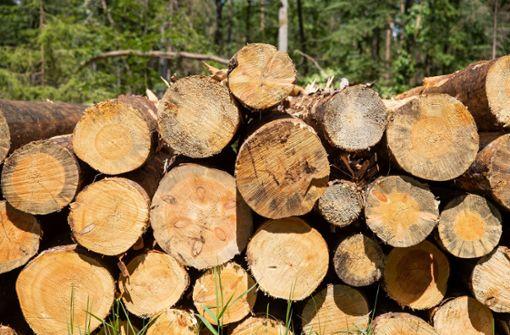 Schäden in Deutschlands Wäldern noch größer als angenommen