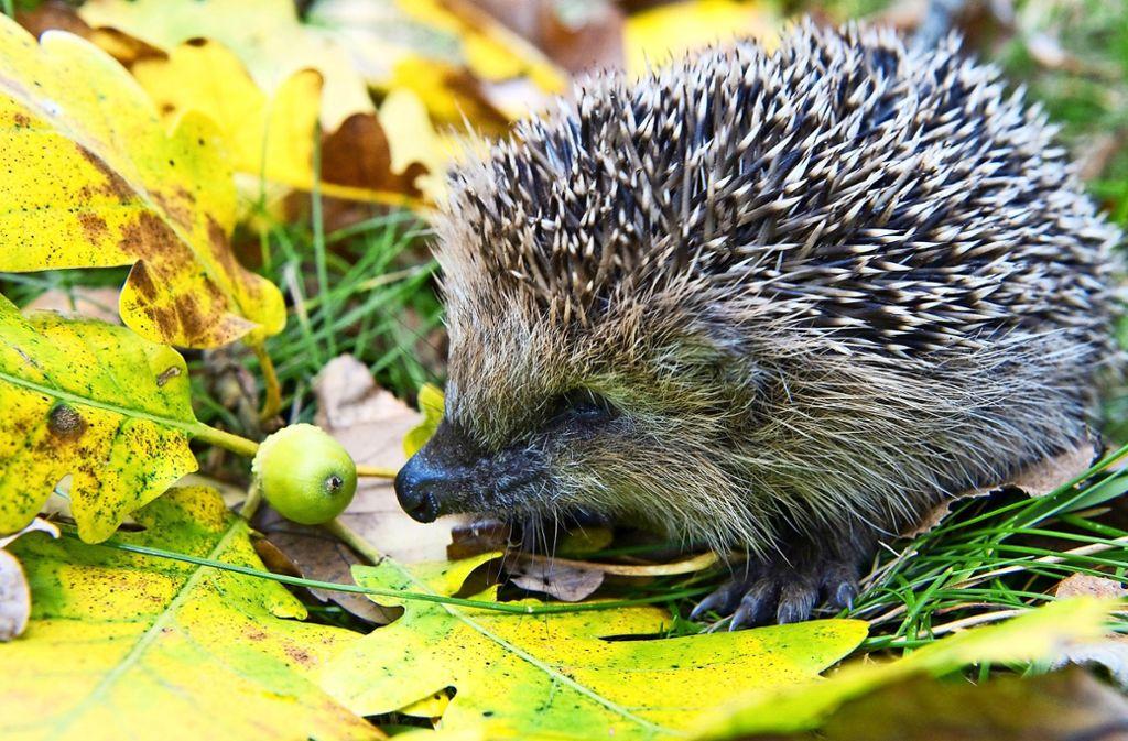 Wer Blätter und Gartenabfälle verbrennt, riskiert ein Bußgeld. Und er gefährdet Tiere, die in Grüngut und Laubhaufen Nahrung und Schutz suchen. Foto: dpa/Patrick Pleul
