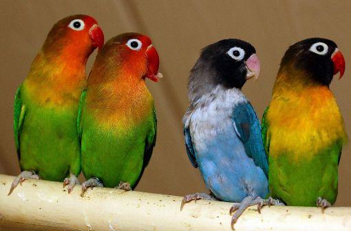 Die Junkie-Papageien