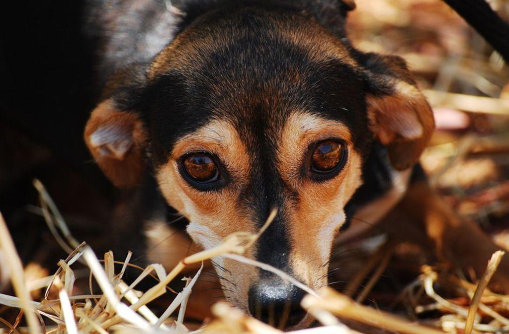 Wer einem Tier ein neues Zuhause geben will, muss sich vor seinem Besuch im Tierheim anmelden. Foto: Pixabay/katja