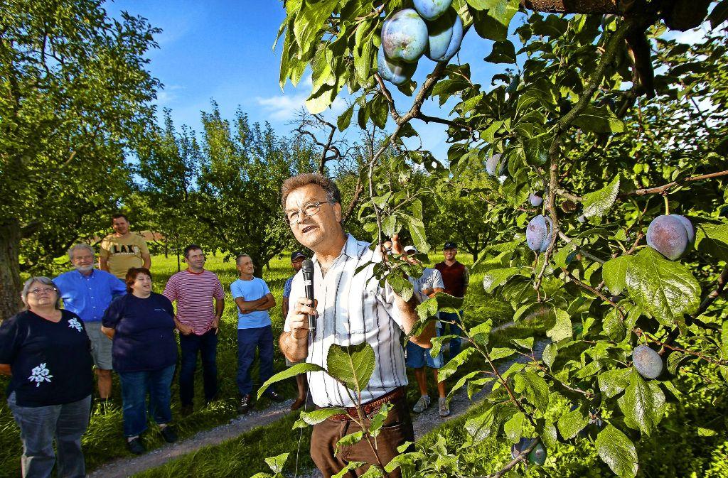Manfred Nuber freut sich über  Elena: Die Bäume tragen gut. Foto: factum/Bach