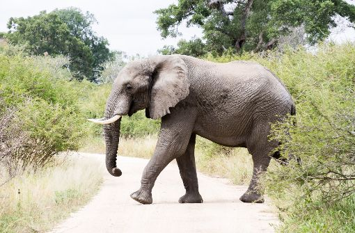Wilder Elefant tötet Mann