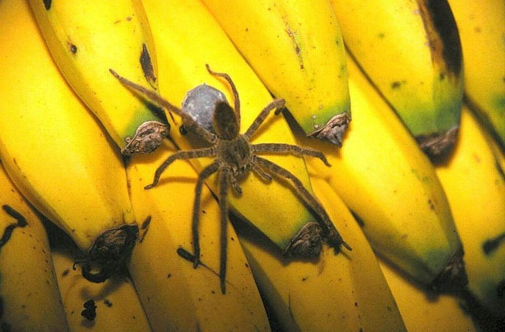 Wegen einer Spinne ist ein Supermarkt im Hamburger Stadtteil Rothenbaum am Montag stundenlang geschlossen worden. (Archivbild) Foto: dpa