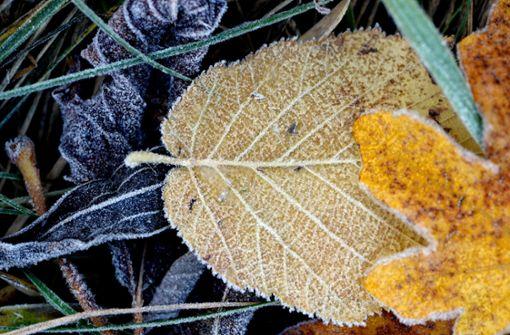 Erster Bodenfrost in Baden-Württemberg möglich