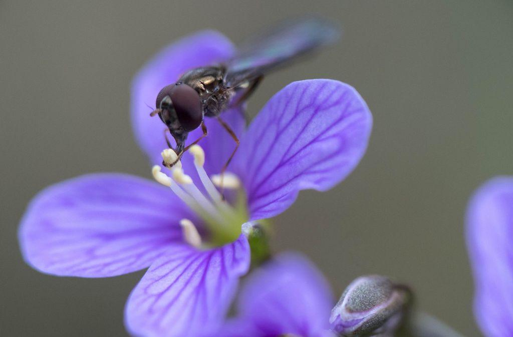 Doch keine Blütenpracht in Leonberg zur Landesgartenschau. Foto: dpa