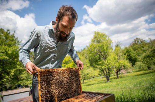 Naturschützer  gegen Bienen-Initiative