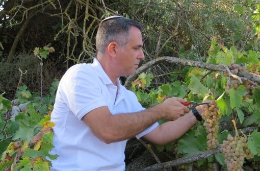 Der Önologe Shivi Drori in seinem Versuchsweinberg. Foto: Ariel University