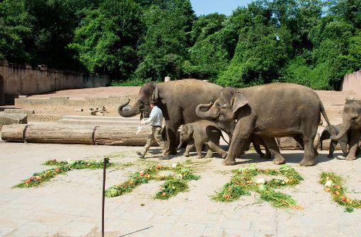 Wurden Elefanten-Jungtiere gequält?