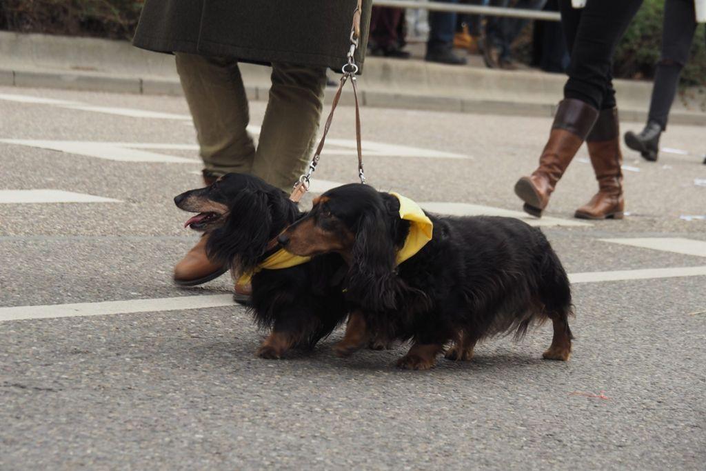 Sind sie nicht süß? Foto: LKZ/kle