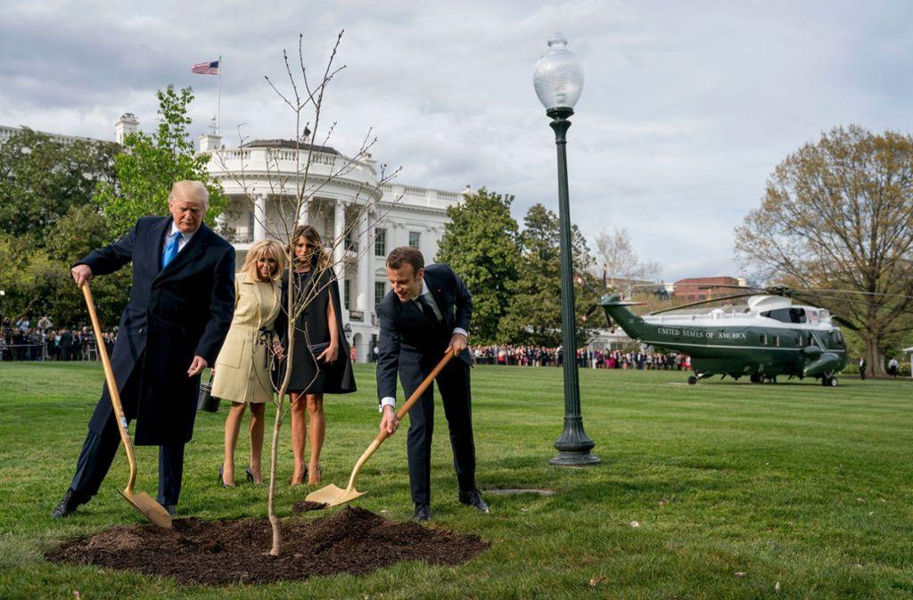 Die Eiche, die  Emmanuel Macron und Donald Trump einst gemeinsam  pflanzten, ist  eingegangen. Foto: AP