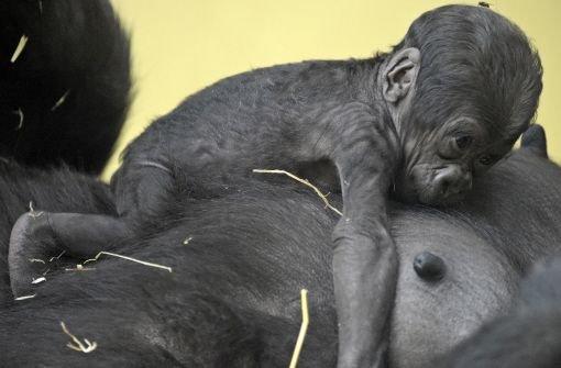 Im Zoo lernt sichs besser