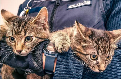 Kätzchen wirbeln Polizeirevier auf – Wer kennt den Besitzer?