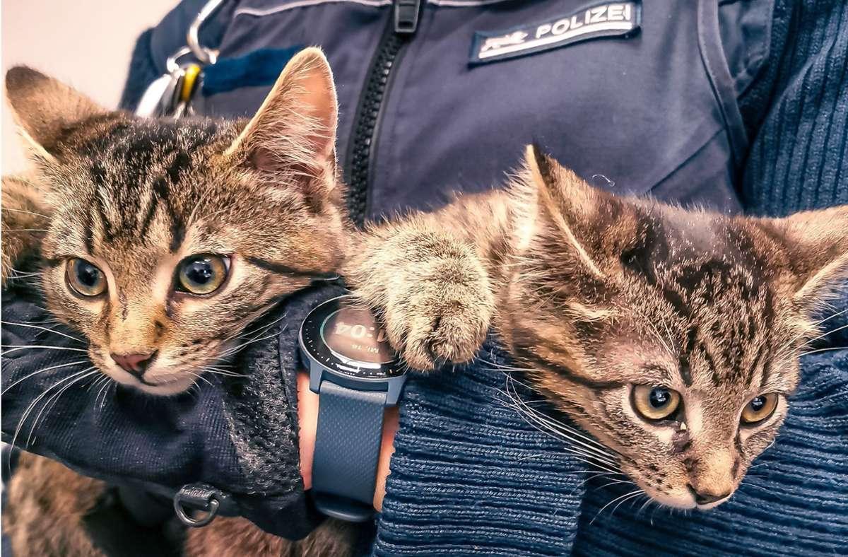 Die beiden Kätzchen suchen ihren Besitzer (Symbolbild). Foto: Facebook/Polizei Stuttgart