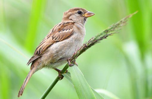 Den Vögeln geht die Nahrung aus