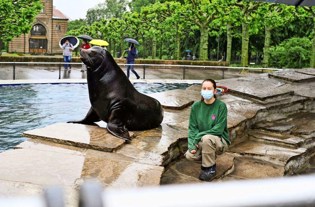 Für das Foto mit seiner Tierpflegerin  Stefanie Waibel wirft sich dieser Seelöwe prompt in Pose. Foto: Lichtgut/Max Kovalenko