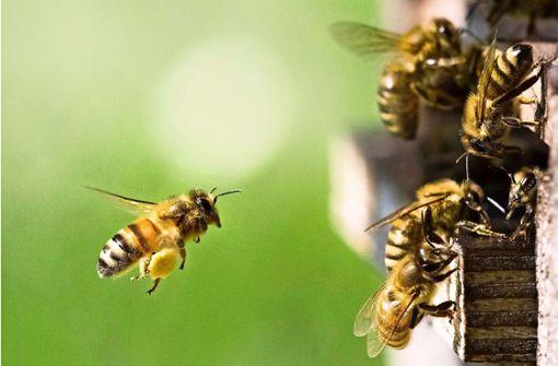 Wie gut wirken Produkte aus dem Bienenstock?