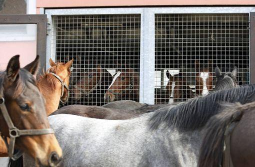 Feuer in Reitstall – zahlreiche Pferde sterben