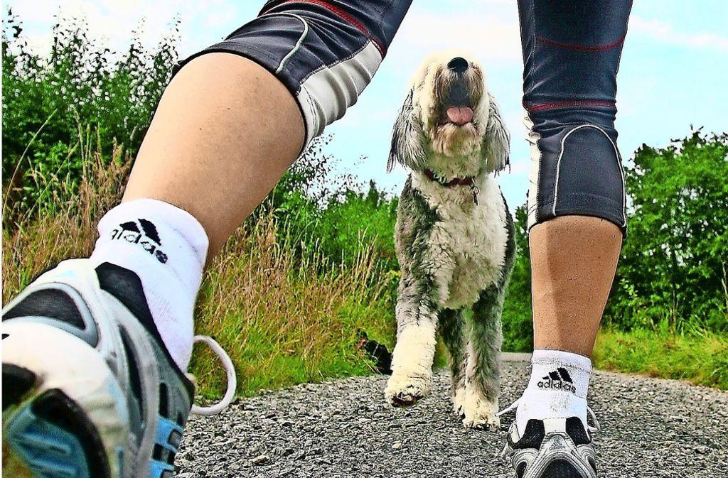 Der Hund soll sich laut Besitzer nicht aggressiv verhalten haben. (Symbolbild) Foto: Avanti
