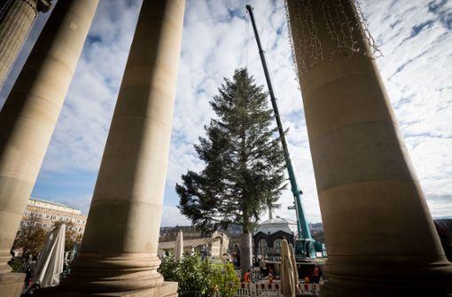 Christbaum am Schlossplatz steht