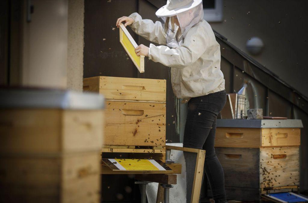 Astrid Loff versorgt die Bienen auf dem Winnender Rathausdach.Foto:Gottfried Stoppel Foto: