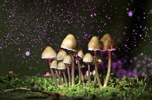Pilze gegen Depressionen