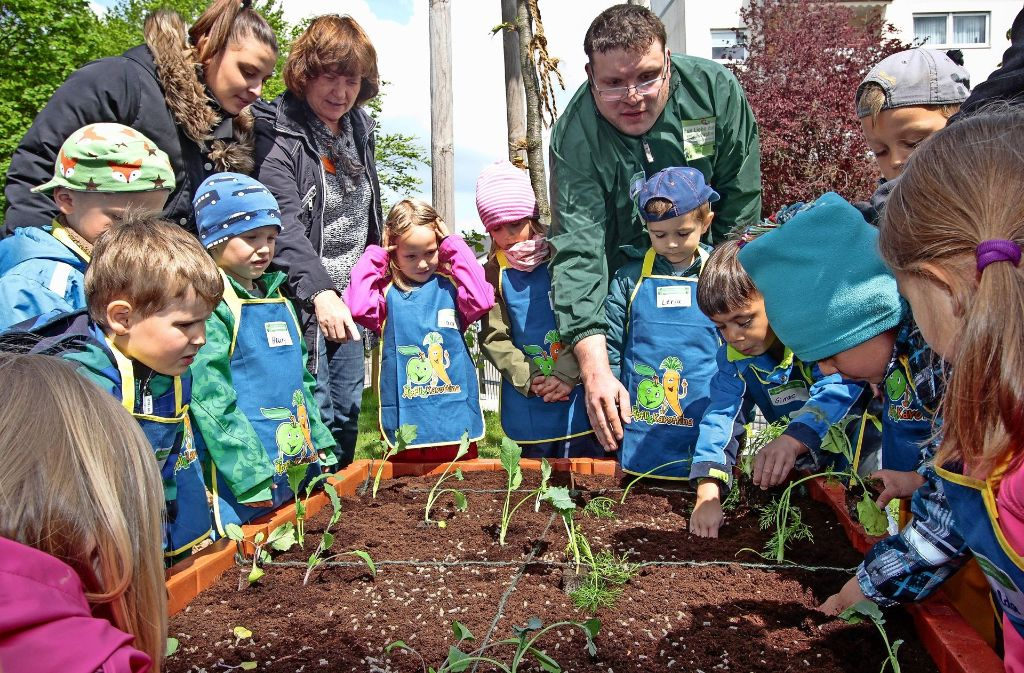 Ein Gemeinschaftsprojekt: Die Kinder pflanzen die Gemüsesetzlinge   mit Kindergärtnerinnen und dem Team der Edeka-Stiftung in das neue Hochbeet. Foto: factum/Bach