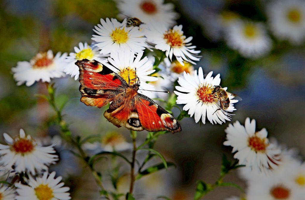 Seit etwa 1990 ist die Zahl der Insekten  um 75 Prozent zurückgegangen – das ist das zentrale Ergebnis einer neuen Studie. Foto: dpa