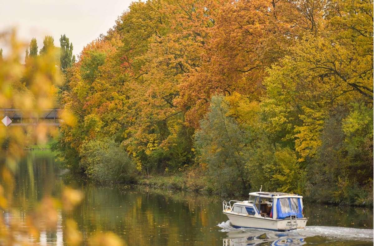 Der Herbst lässt die Bäume in und um Stuttgart in bunten Farben leuchten. Foto: Lichtgut/Max Kovalenko