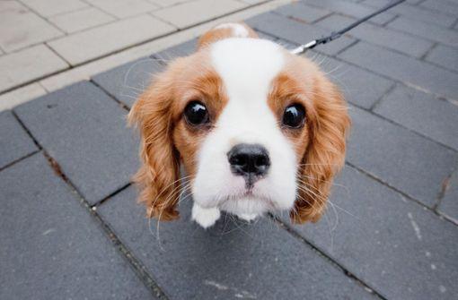 Woher kommt der Hundeblick?