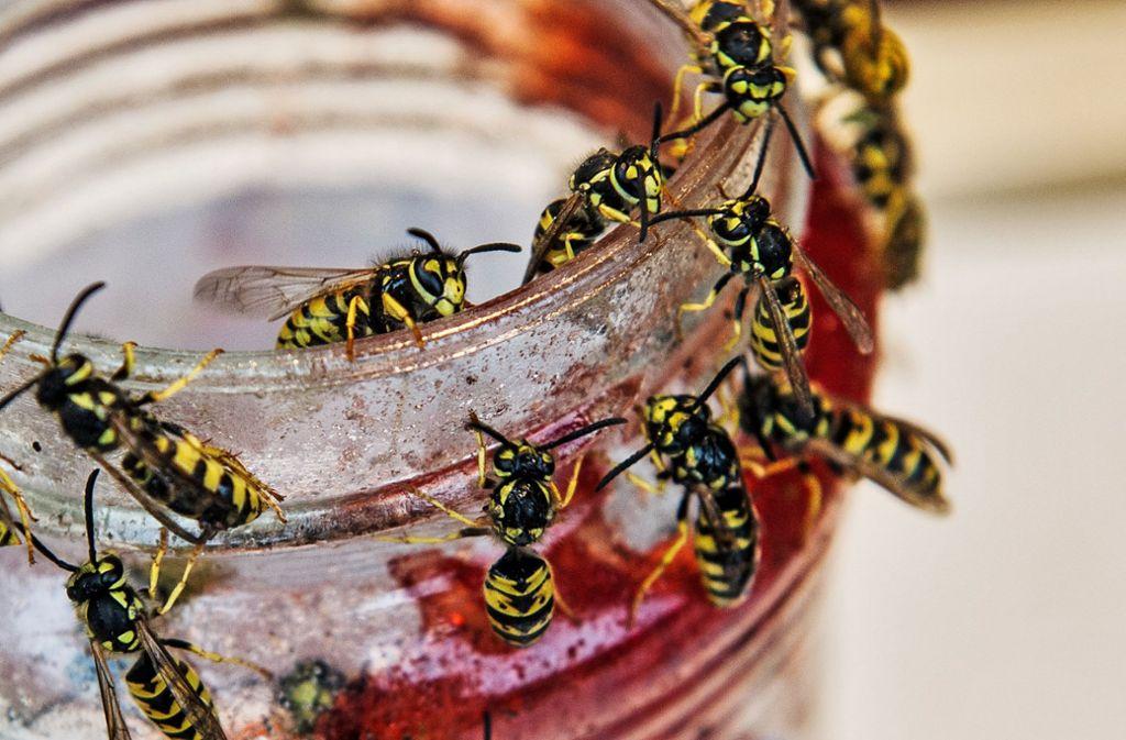 Wespen haben im Sommer Hochsaison. Foto: dpa