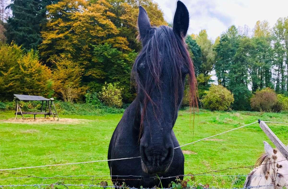 Das ist ein Pferd. Kinder mögen Pferde. Foto: Setzer