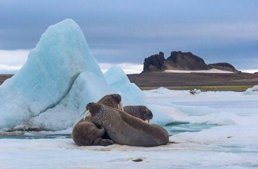 Eiskalt und traumhaft schön  – die Barentssee