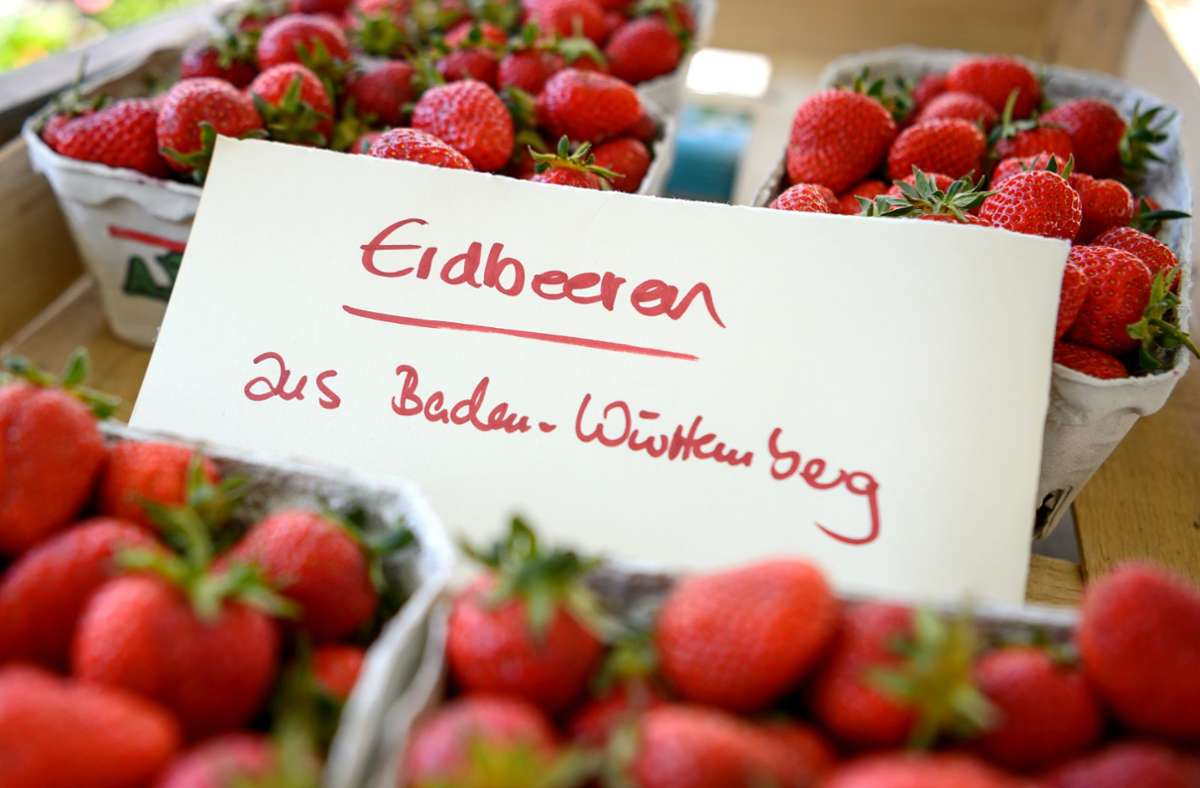 Die Hitze im Juni hat viele Erdbeeren im Südwesten heranreifen lassen. (Archivbild) Foto: dpa/Sina Schuldt