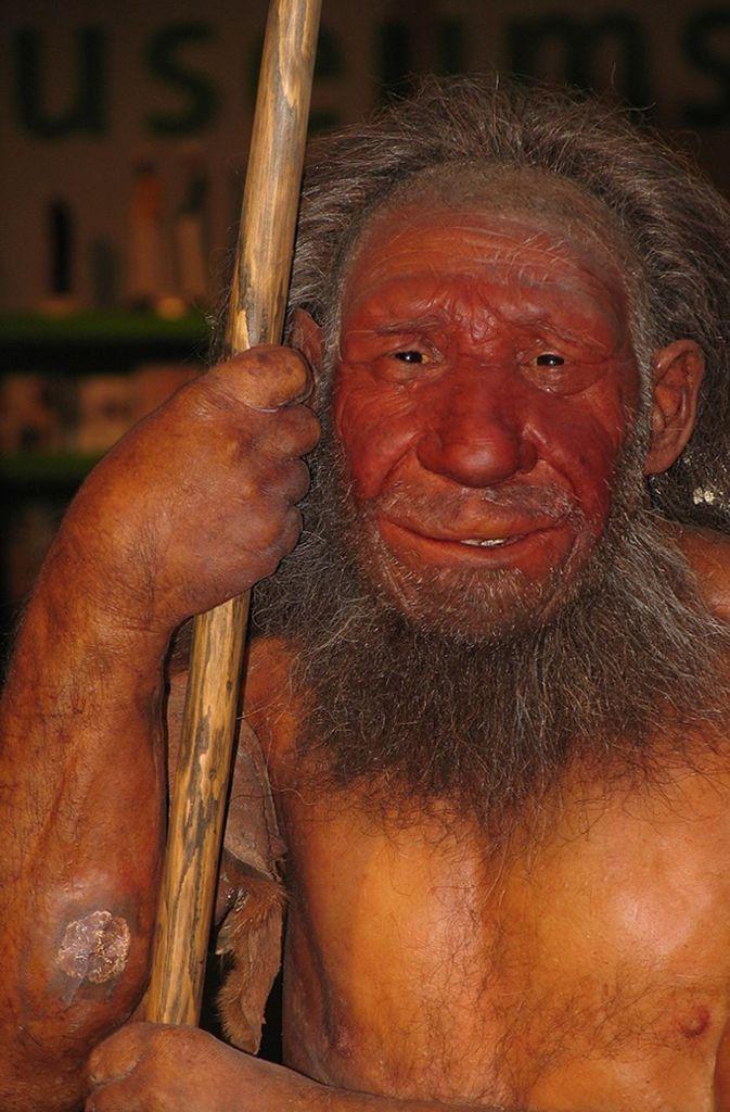 Homo neanderthalensis: Alter: 230 000 bis 32 000 Jahre / Fundort: Deutschland, Israel, Spanien / Verbreitung: Süd-, Mittel- und Osteuropa / Der letzte ausgestorbene Verwandte des heutigen Menschen, der sich in Europa parallel zum Homo sapiens in Afrika aus gemeinsamen afrikanischen Vorfahren entwickelte. Der Name geht auf das Neandertal, einem Talabschnitt des Flusses Düssel, zurück, wo die ersten Skelettteile 1856 gefunden wurden (Rekonstruktion eines Neandertalers im Neanderthal Museum). Foto: Wikipedia commons/Stefan Scheer/CC BY 2.5