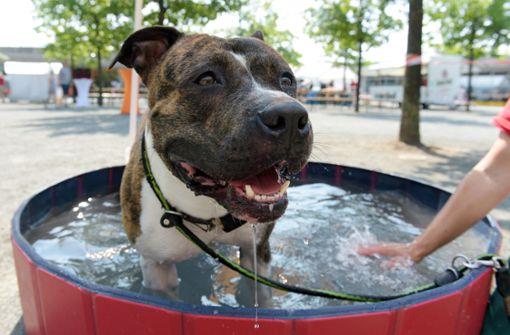 Polizei vermutet Verstoß bei Hundewelpen