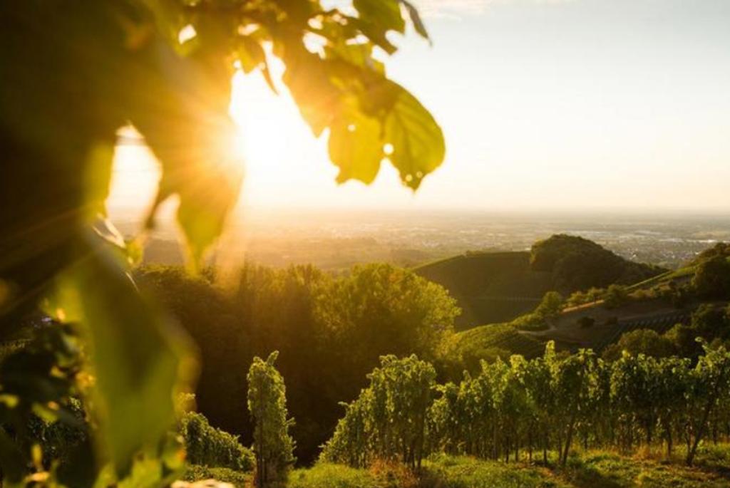 Sanftes Licht und romantische Stimmung: Sasbachwalden im Schwarzwald ist ein lohnendes Ziel für Radfahrer in Deutschland. Foto: Tourist-Info Sasbachwalden/ Steffen Egly