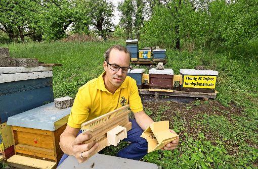 Gescheiterte Revolution im Bienenstock