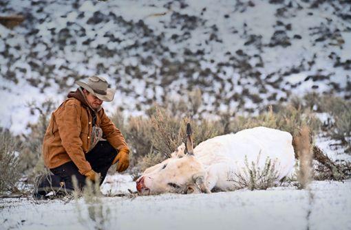 Kalt und tödlich ist Wyoming