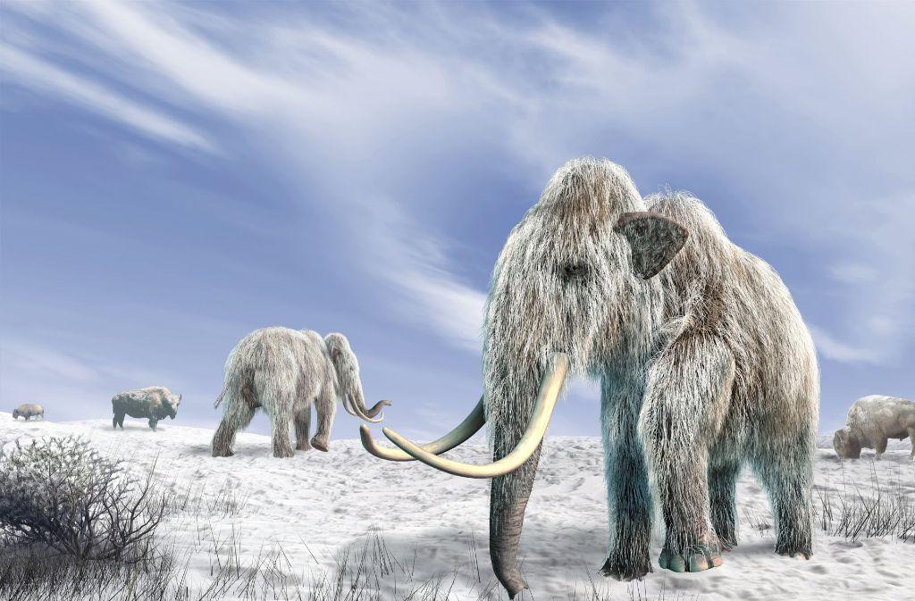 So stellen sich das die Zoologen vor und schaffen am Computer ein Bild:  Wollhaar-Mammuts und Bisons  auf einer schneebedeckten Weide Foto: