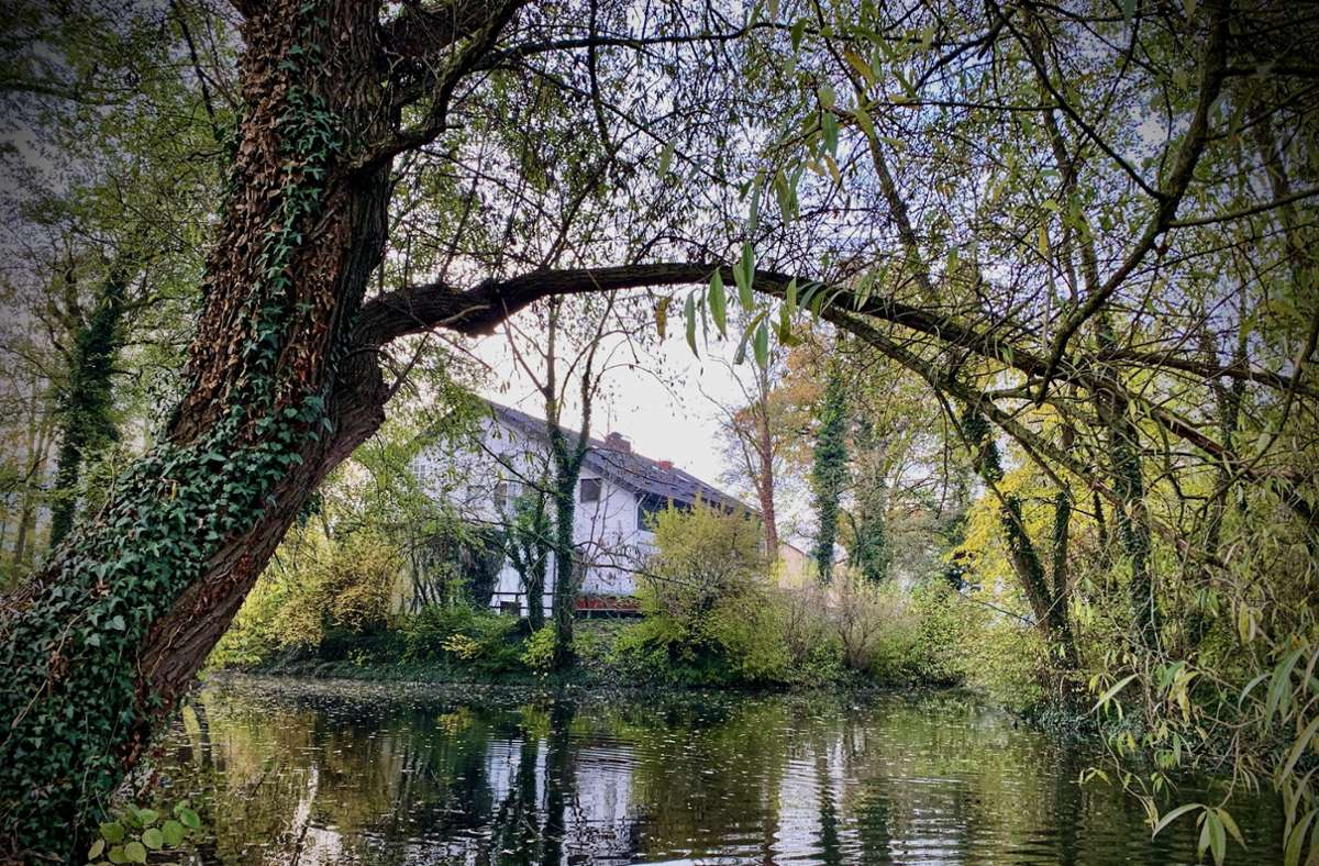 Sieht idyllisch aus, doch um die Wasserqualität ist es im Riedsee in Stuttgart-Möhringen nicht immer gut bestellt gewesen. Foto: Götz Schultheiss