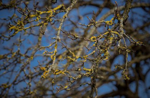 Unbekannter zerstört drei junge Obstbäume – Zeugen gesucht